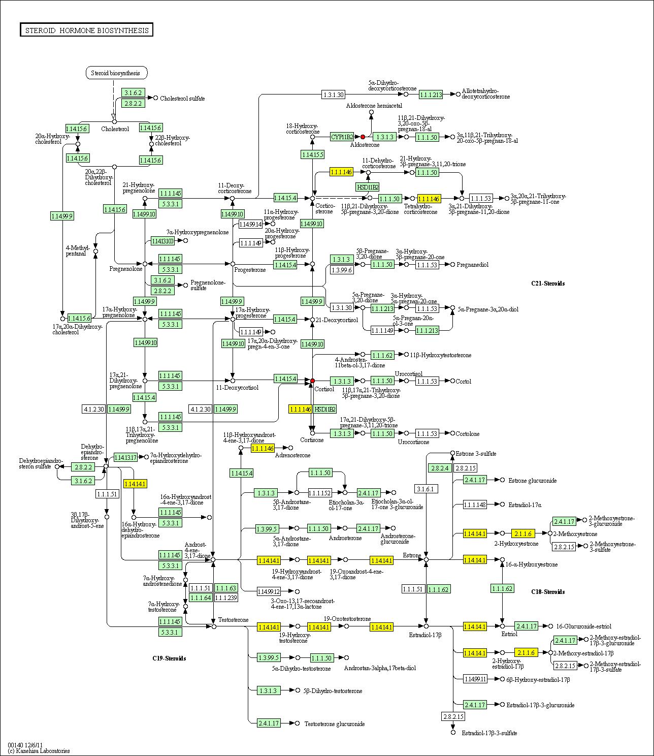 11 beta hydroxysteroid dehydrogenase type ii