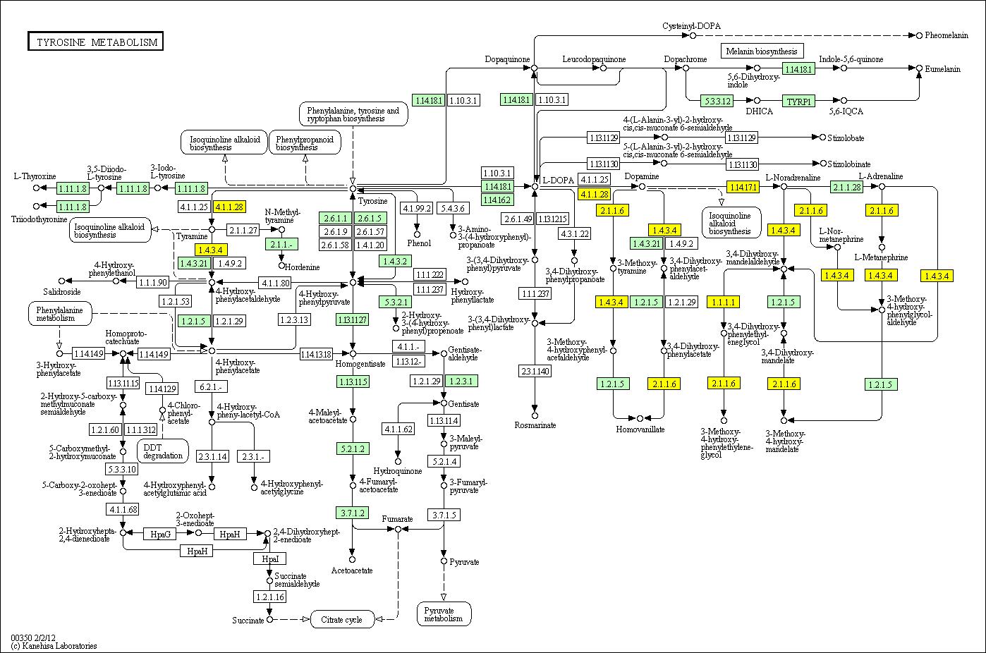 Search Pathway Wiring Diagram Honda Ch 80