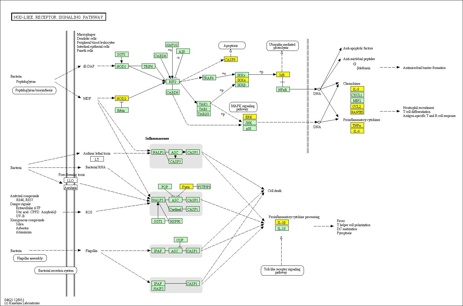 MS Kegg pathways